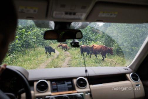 Land Rover Discovery 2012 - отзыв владельца