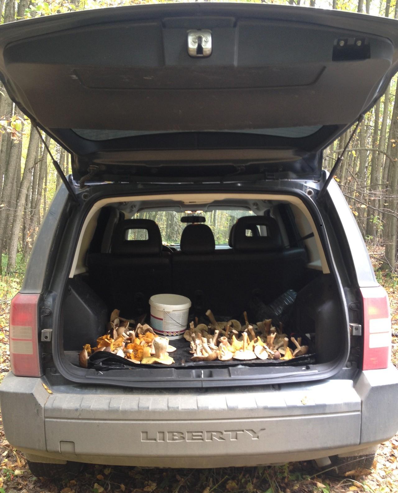 По грибы гоняем часто. В лесу самое то.