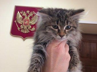 Животному нашли новых хозяев — семью из Красноярска.