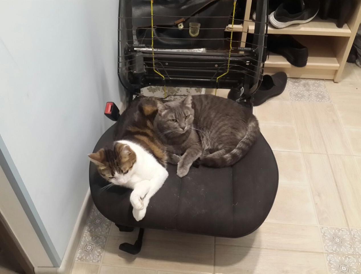 Контрактная сидушка. Пригодилась только котам