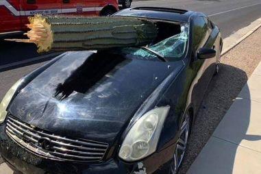 Машина против кактуса: необычное ДТП в США (ВИДЕО)