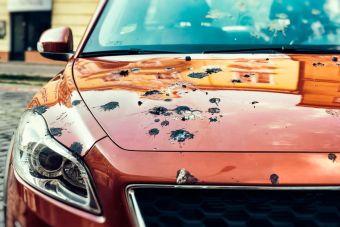 Оказывается, Форд тестирует свои машины на устойчивость к птичьему помету