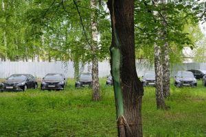 Брошенные в челябинском лесу Camry отправят на борьбу с коронавирусом