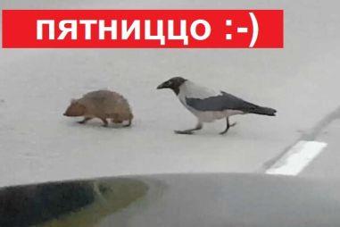 Пятничная подборка видео: очень умная ворона