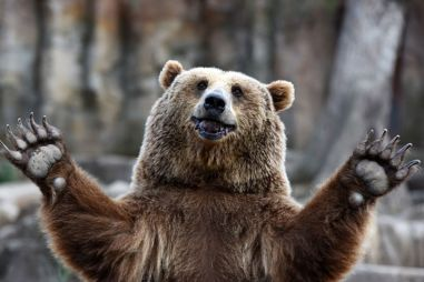 ВИДЕО: медведь разгромил Тойоту американца