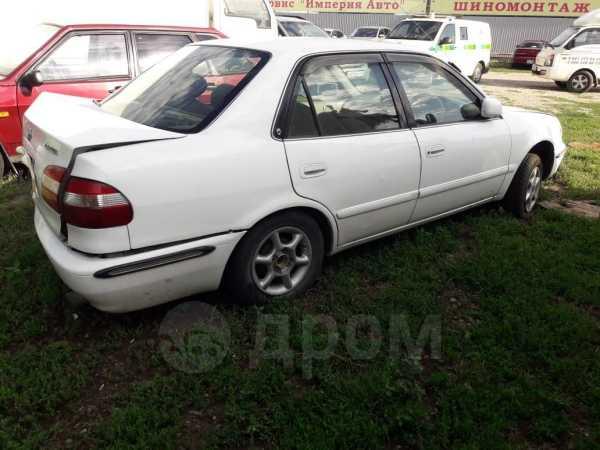 Toyota Corolla, 1998 год, 73 000 руб.