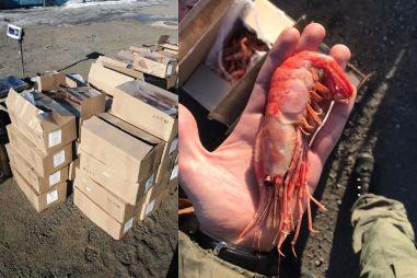 В Приморском крае перевозивший 80 мешков креветок водитель бросил машину и сбежал