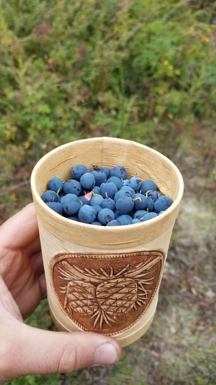 обожаю осень- можно наесться ягод !!!