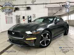 Краснодар Mustang 2019